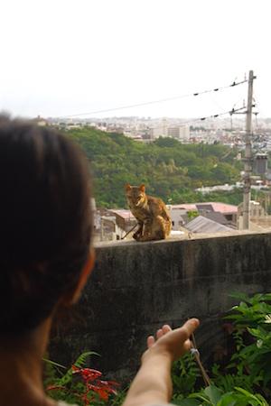 那覇の街を眺めるグスク(2014年8月)