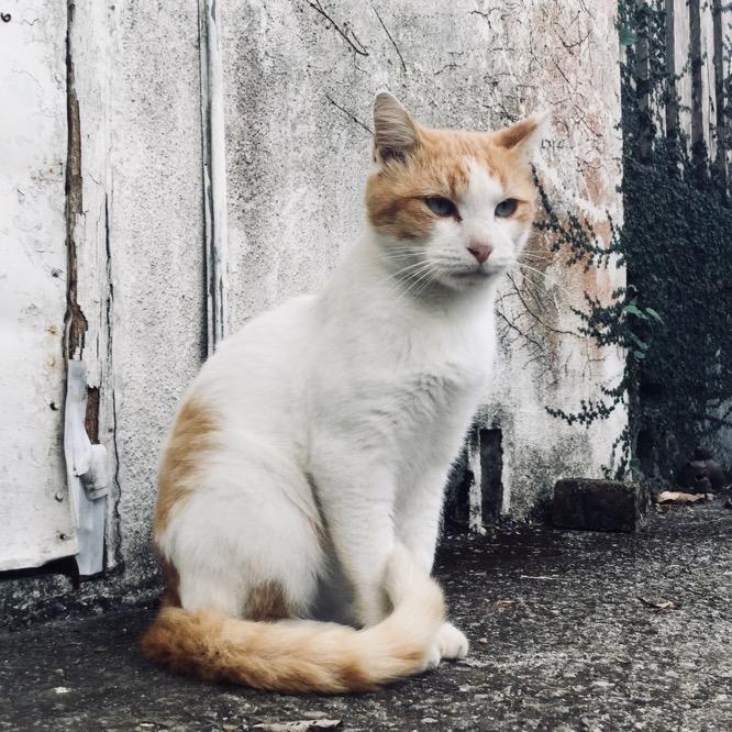凛々しい野良猫