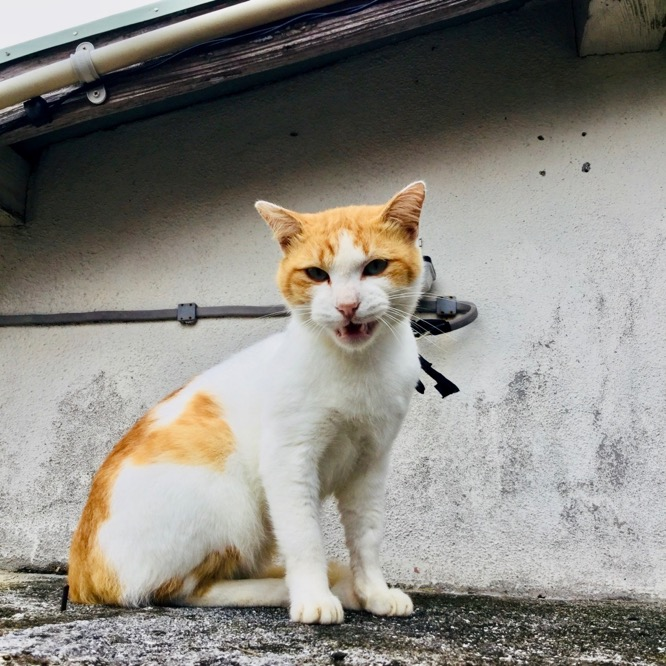 野良猫の威嚇
