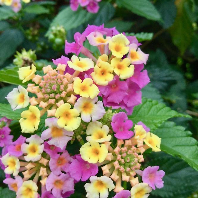 道端で咲く花
